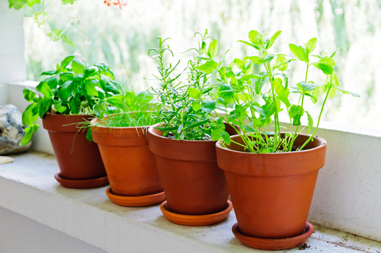 your natural drug store growing medicinal herbs indoors, Natural flower