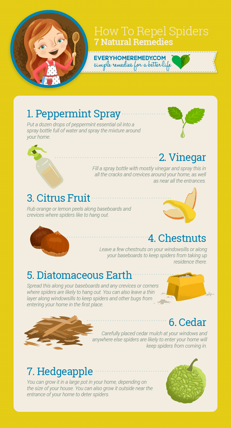 Natural spiders repellents - infographic