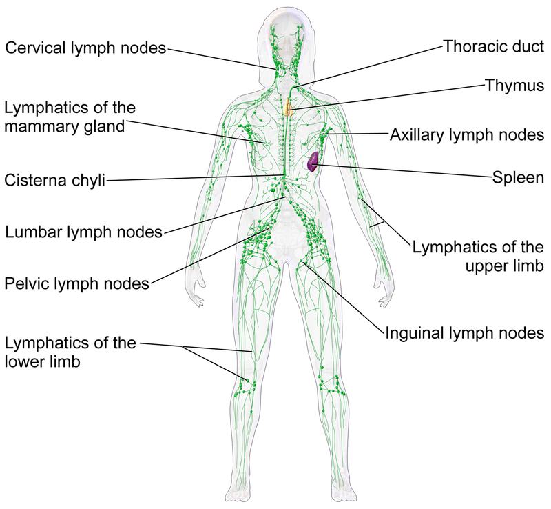 lymph detox massage guide
