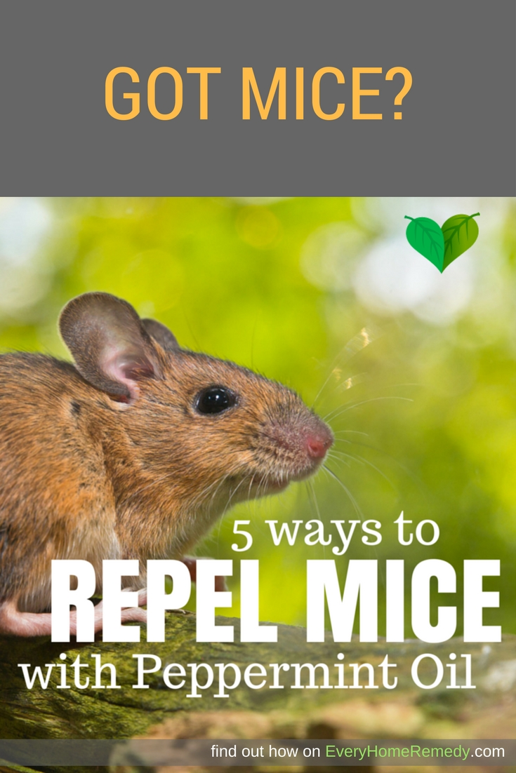 What works to repel mice?