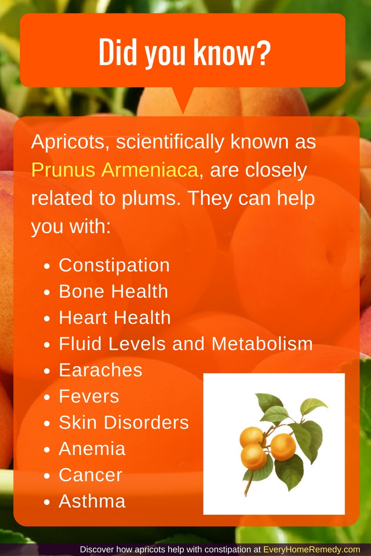 are dried apricots like prunes? They are similar in terms of help when you're constipated