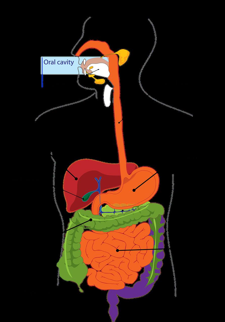 Digestion Acid Reflux