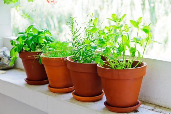 Herbs Balcony