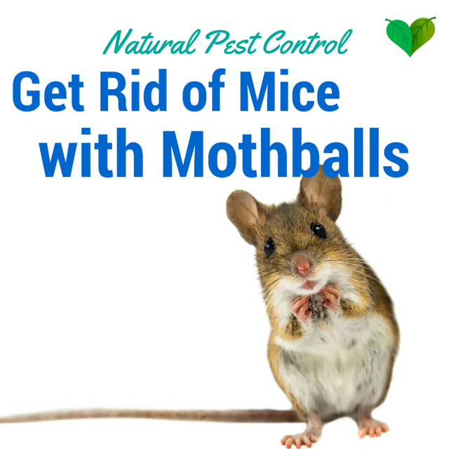 mice remedies