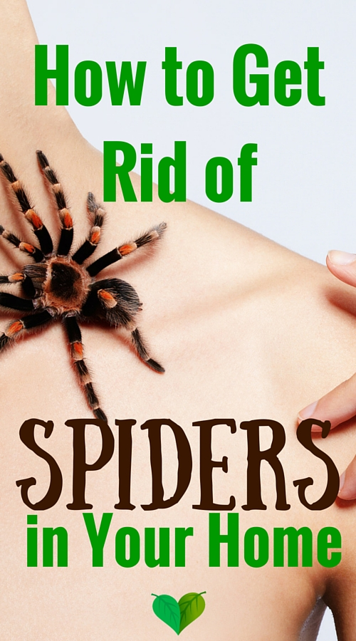 how to repel spiders